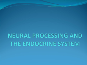 neural processing and the endocrine system