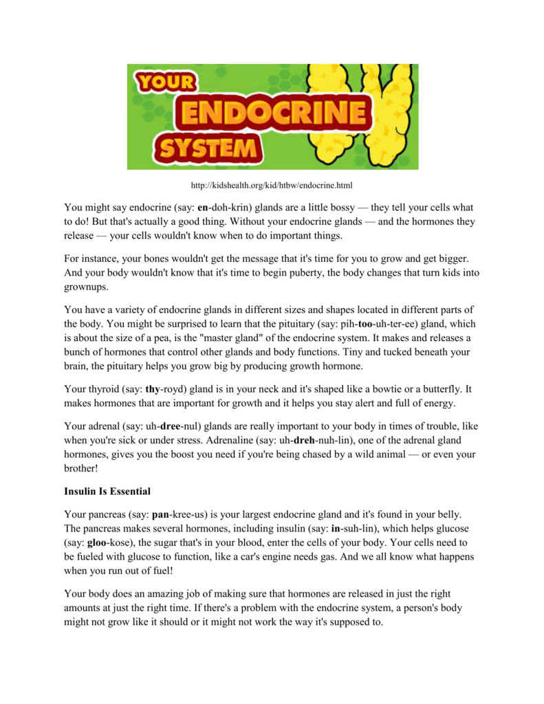 How to Take Care of the Endocrine System - AdVENTUREScience-7th