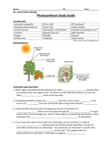 6B. Photosynthesis Summary Worksheet