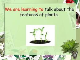 The Features of Plants