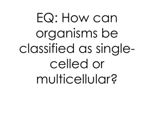 Single-celled vs multicellular