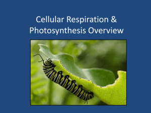 Cellular Respiration & Photosynthesis Overview