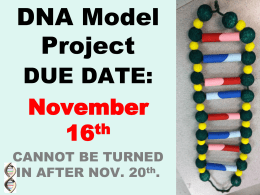 DNA Model Project Examples