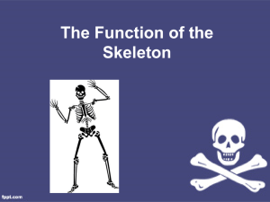 PP_skeleton