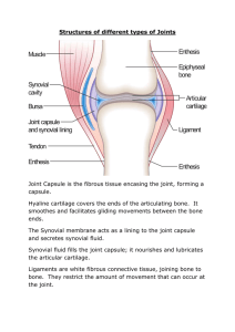 Structures of different types of Joints