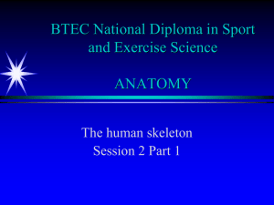 2nd lecture part 1 - function of skeleton and types of bones