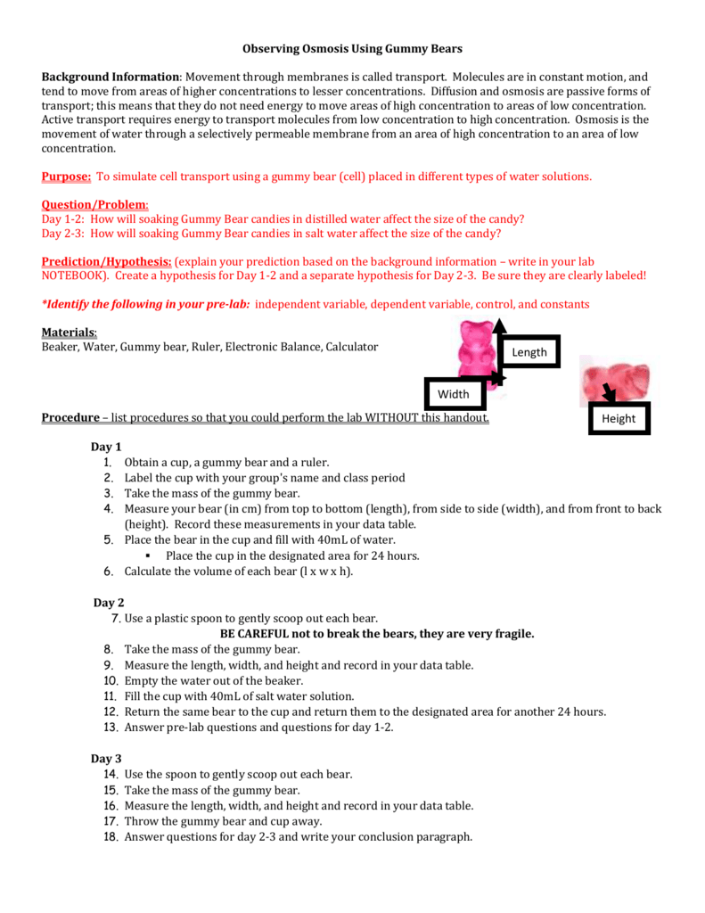 worksheet Gummy Bear Experiment Worksheet gummy bear lab