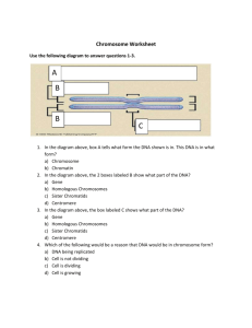 11-7-12 Chromosome Worksheet