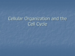 Cellular Organization and the Cell Cycle