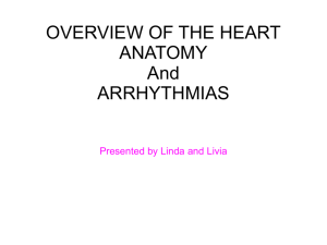 heart anatomy & arrhythmias
