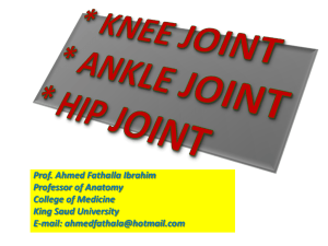 Hip, Knee & ankle joints - King Saud University Medical Student