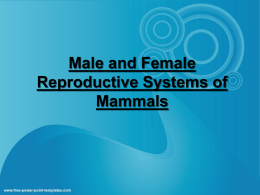 Male and Female reproductive systems of mammals