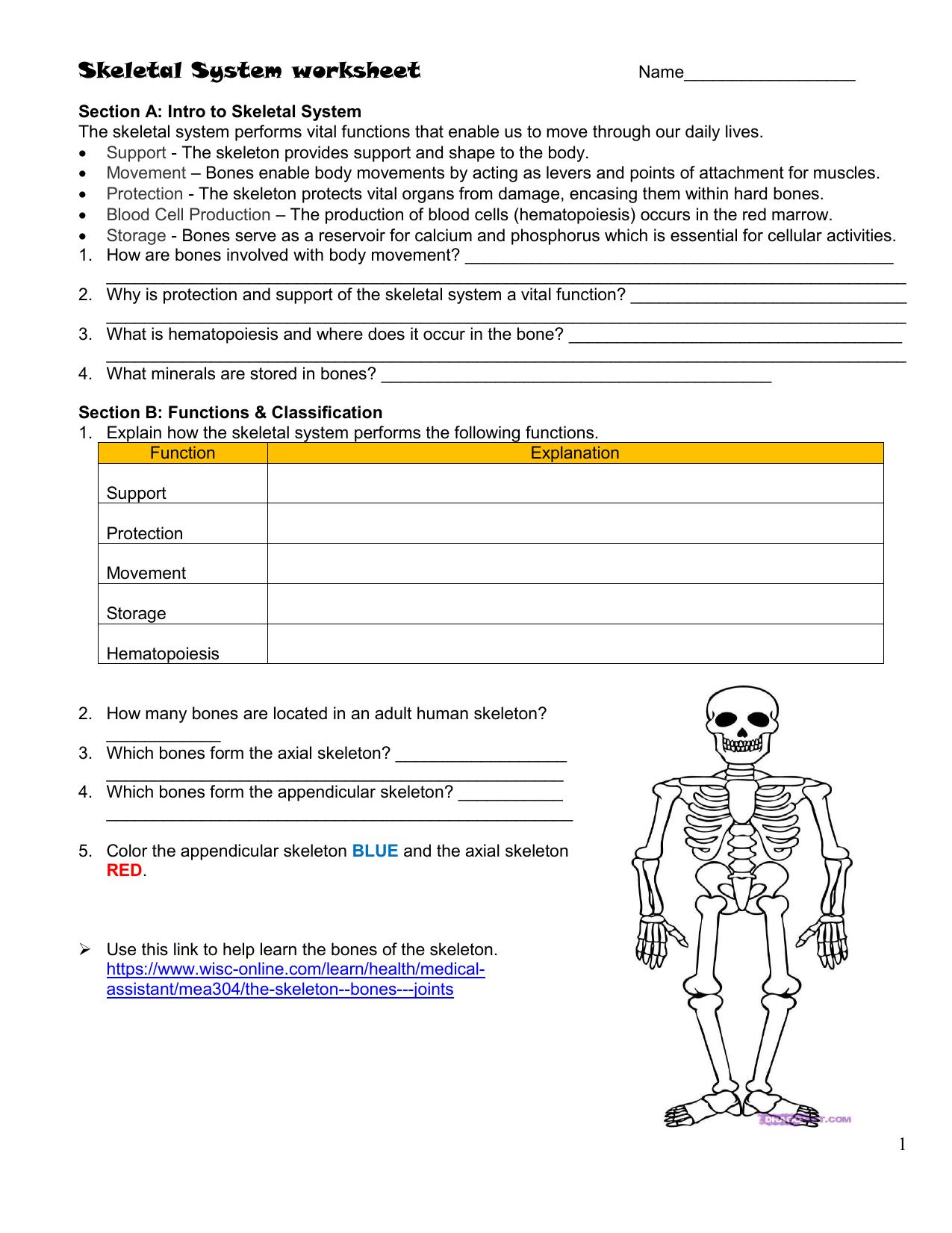 skeletal-worksheet