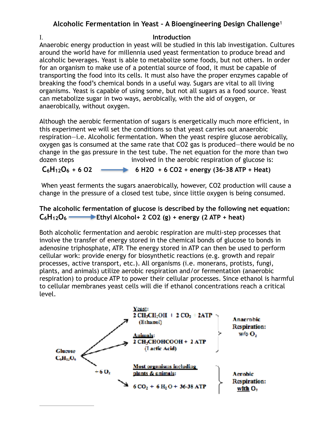 background information on yeast fermentation