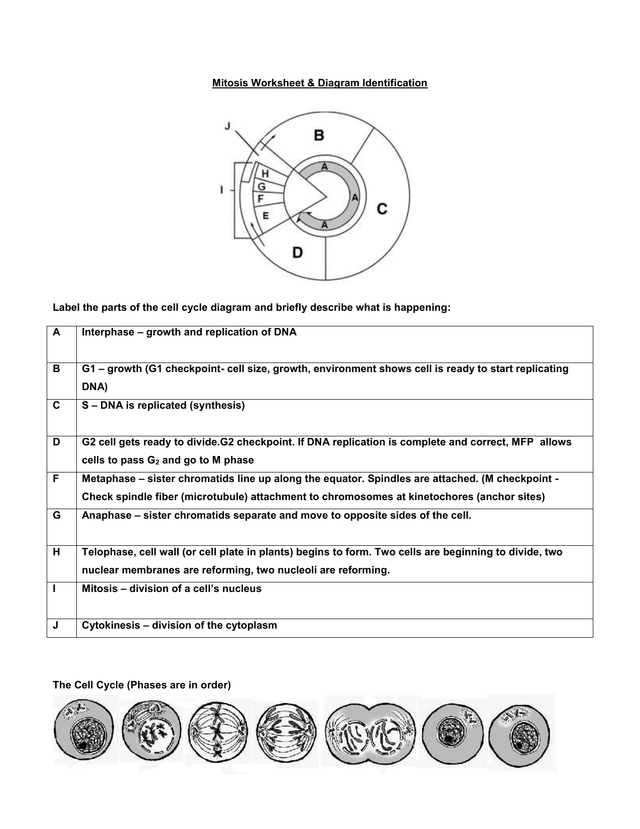 Mitosis Vs Meiosis Worksheet Answers Promotiontablecovers