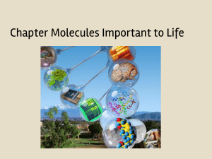 Molecules of Life Notes