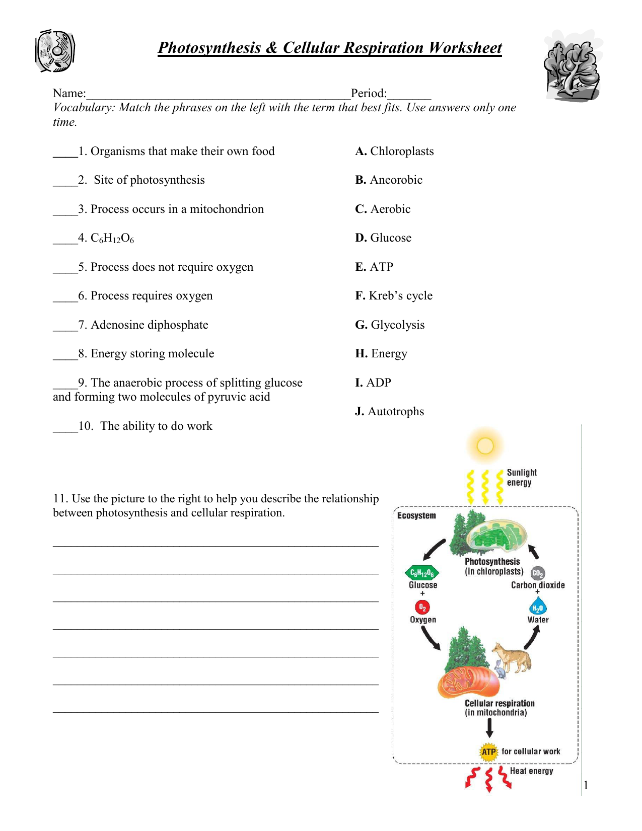Photosynthesis & respiration worksheet