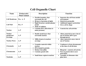 Cell Organelle Chart Key 2011