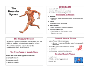 Intro to the Muscular System TC