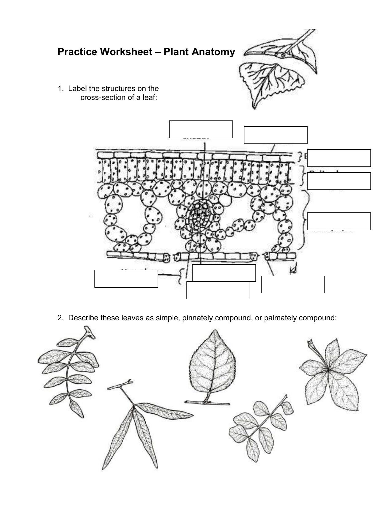 Plant Anatomy (2)