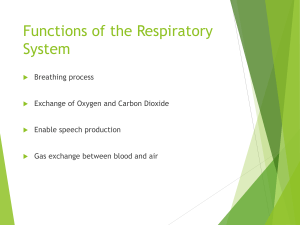 respiratory system review - allied (1)