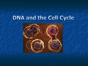 PPT - DNA and the Cell Cycle