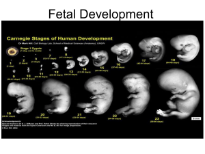 Fetal Development 2018
