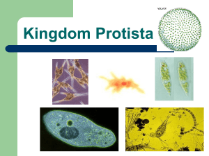 chapter 19 - protist