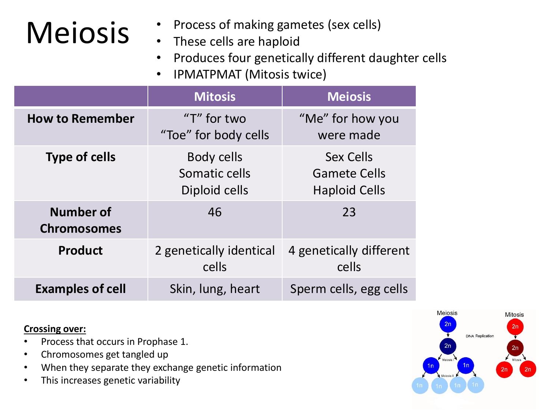 Sex cells gametes genetic information