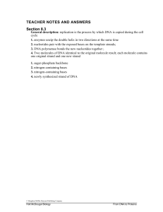 dna replication student sheet