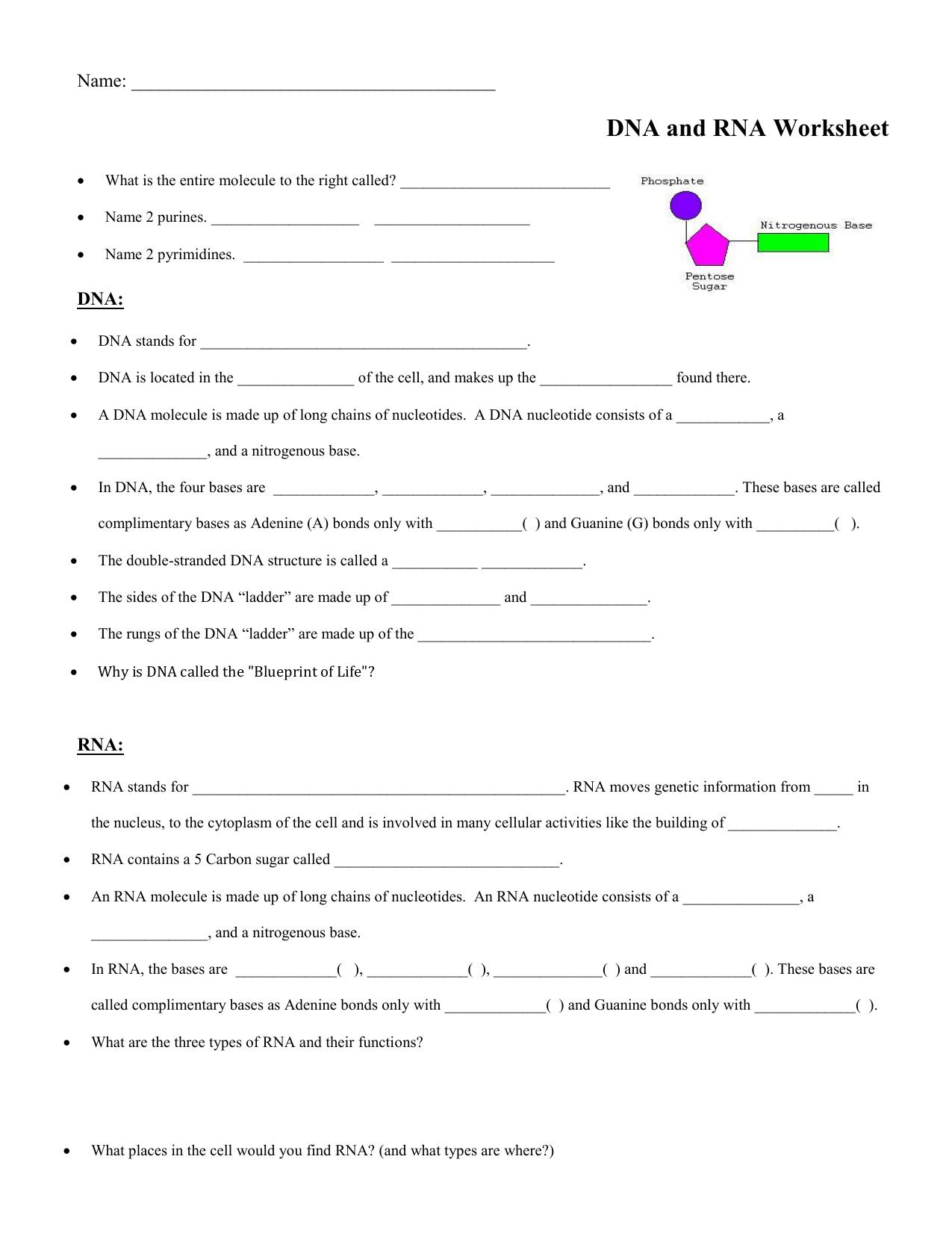 DNA:RNA worksheet