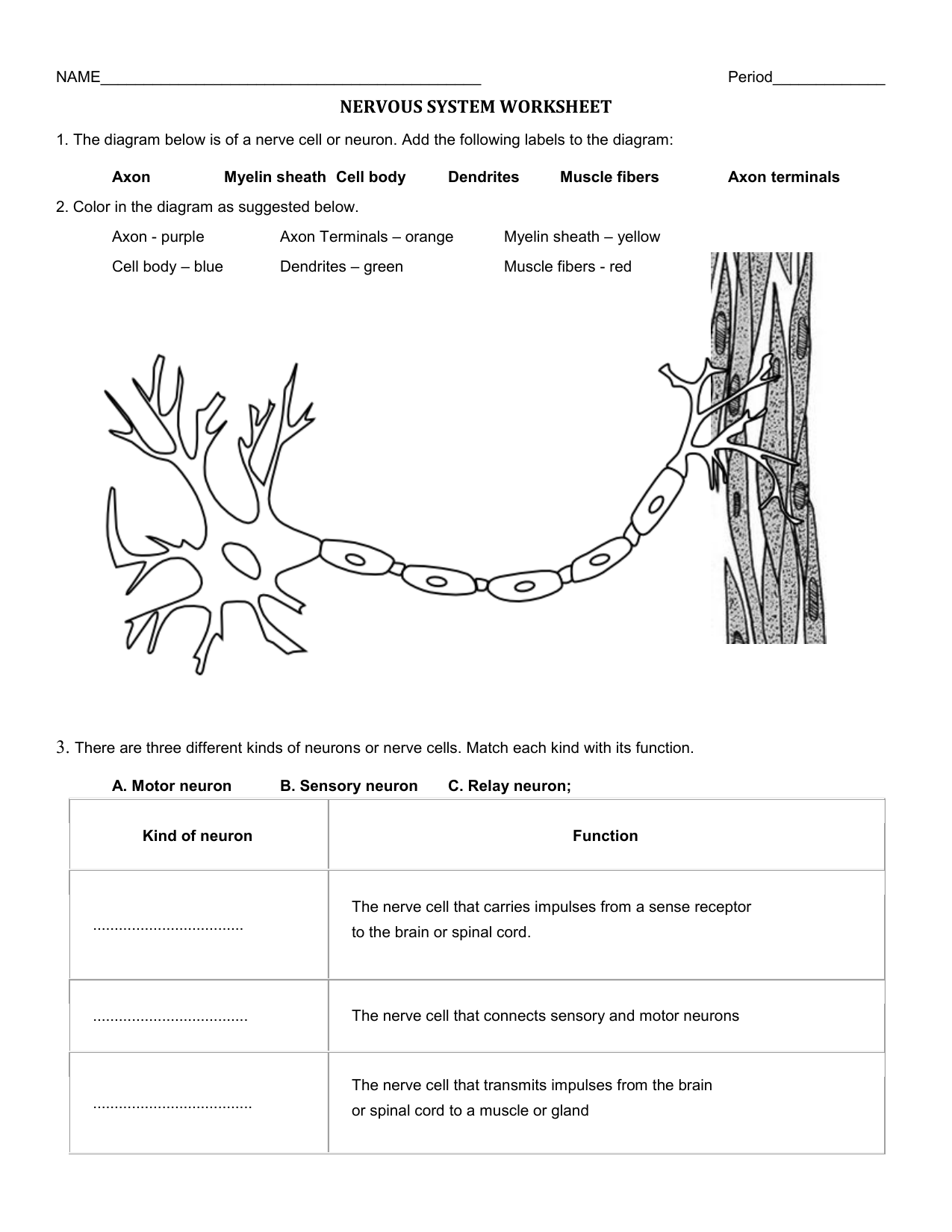 Nervous-System-Worksheet
