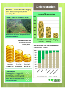 Facts&worksheet deforestation