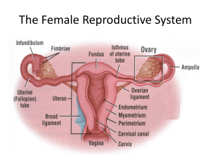 Human female reproductıve system