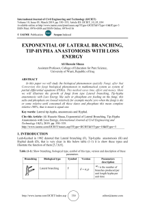 EXPONENTIAL OF LATERAL BRANCHING, TIP-HYPHA ANASTOMOSIS WITH LOSS ENERGY