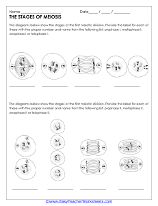 Meiosis Worksheet 2