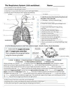 Respiratory Worksheet2019