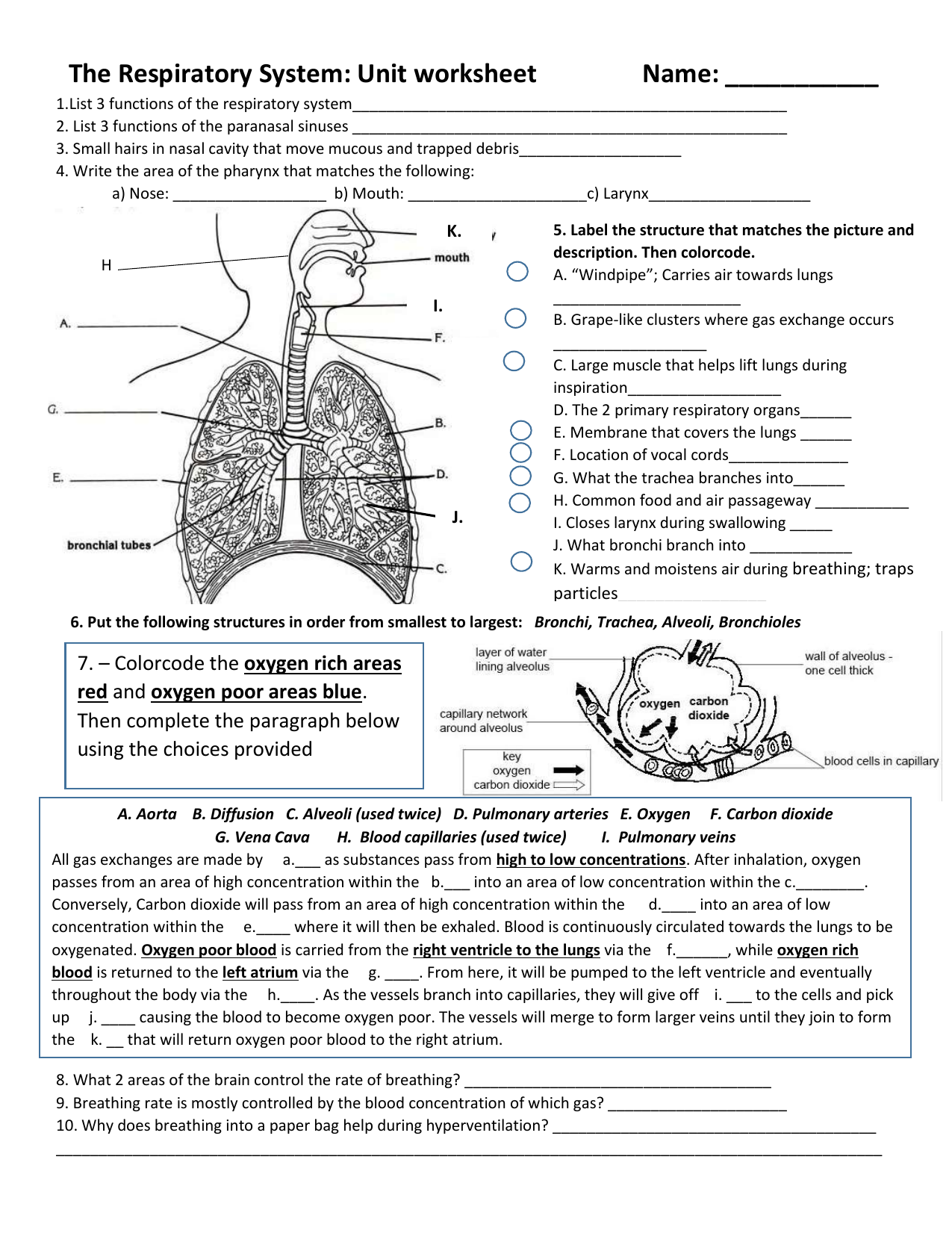 Respiratory Worksheet25 Throughout The Respiratory System Worksheet