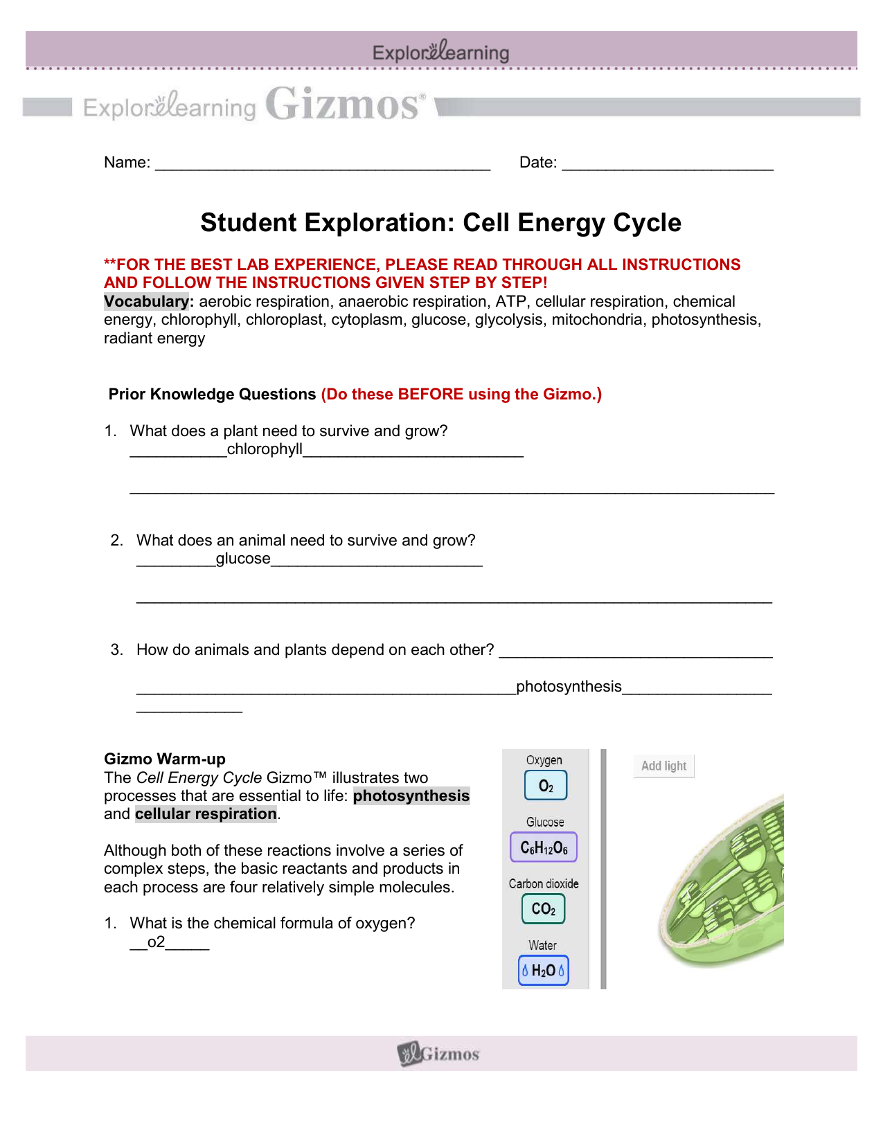 Student Exploration - Cell Energy Cycle (1)