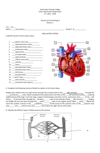 Ileanna Sofia Garcia - circulatory system worksheet