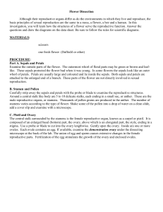 Flower Dissection worksheet