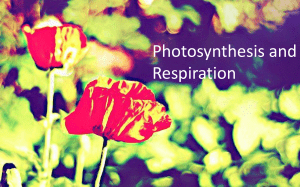 Photosynthesis and RespirationSp2016 - Accessible