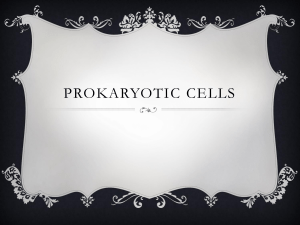 Prokarotic Eukariotic cell sorting activity