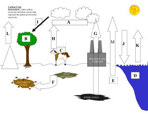 carbon cycle test practice diagram