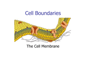 Notes  Cell Membrane  Diffusion