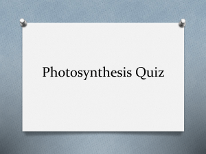 Photosynthesis Quiz