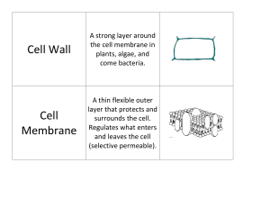 AP Bio Cell Organelle Cardsort