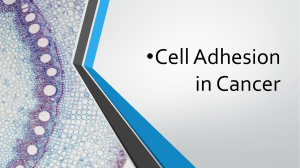 Addition in cancer cell