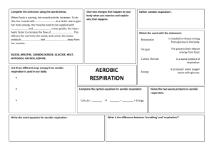 Aerobic-And Anaerobic-Respiration-Worksheet