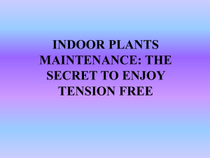 Indoor Plants Maintenance: The Secret To Enjoy Tension Free